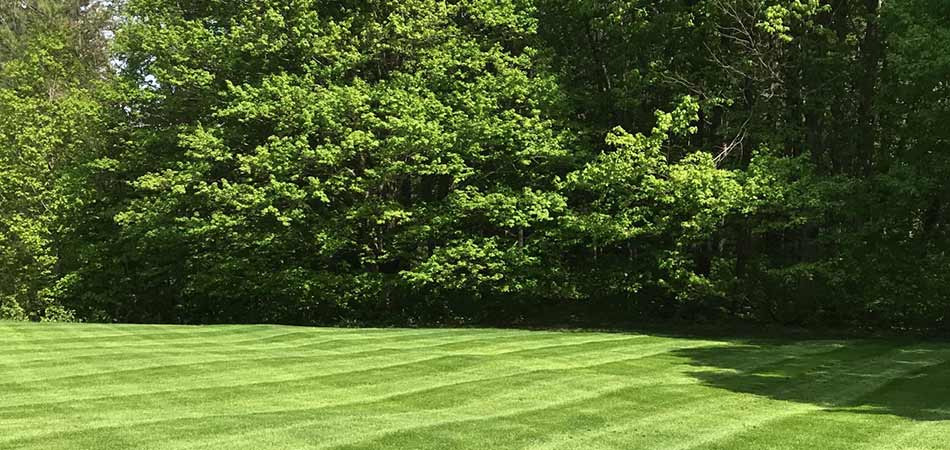 The backyard of this Ashtabula homeowner was just visited by team members from Canter's Classic Lawn Care for maintenance services.