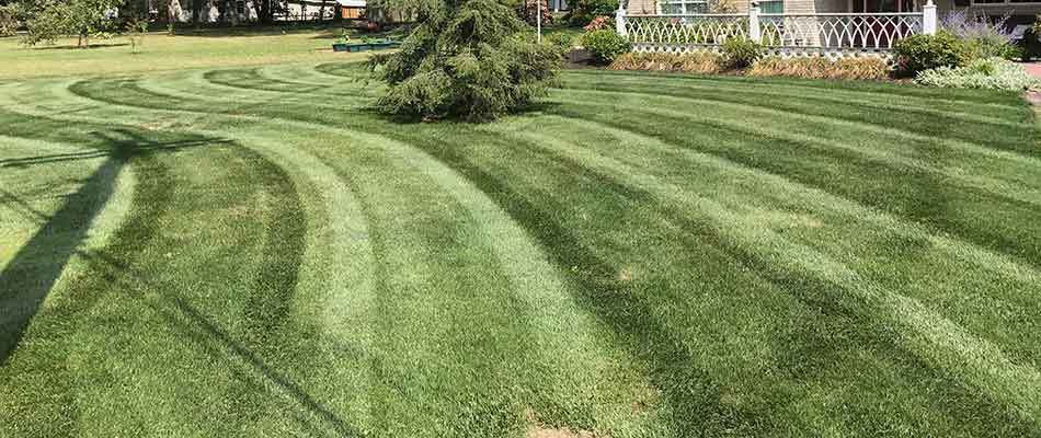 A well-fertilized lawn in Conneaut, OH.