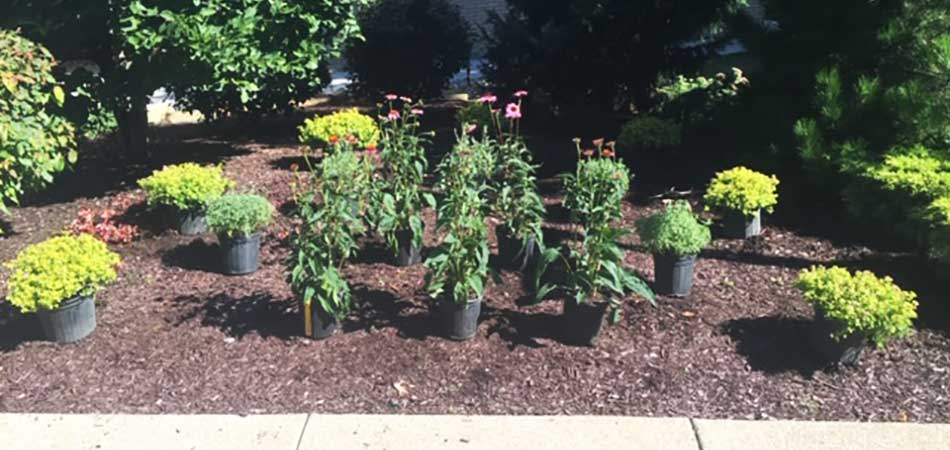 Boxwoods, Holly, and Wild Geraniums are some of the plants we typically install in Conneaut.